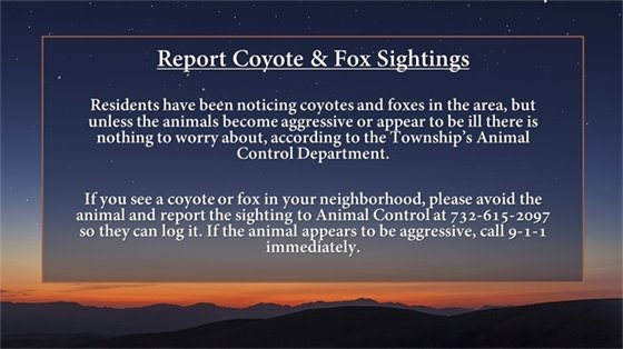 Coyote and Fox Sightings