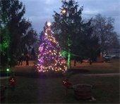 IBCA Christmas Tree Lighting