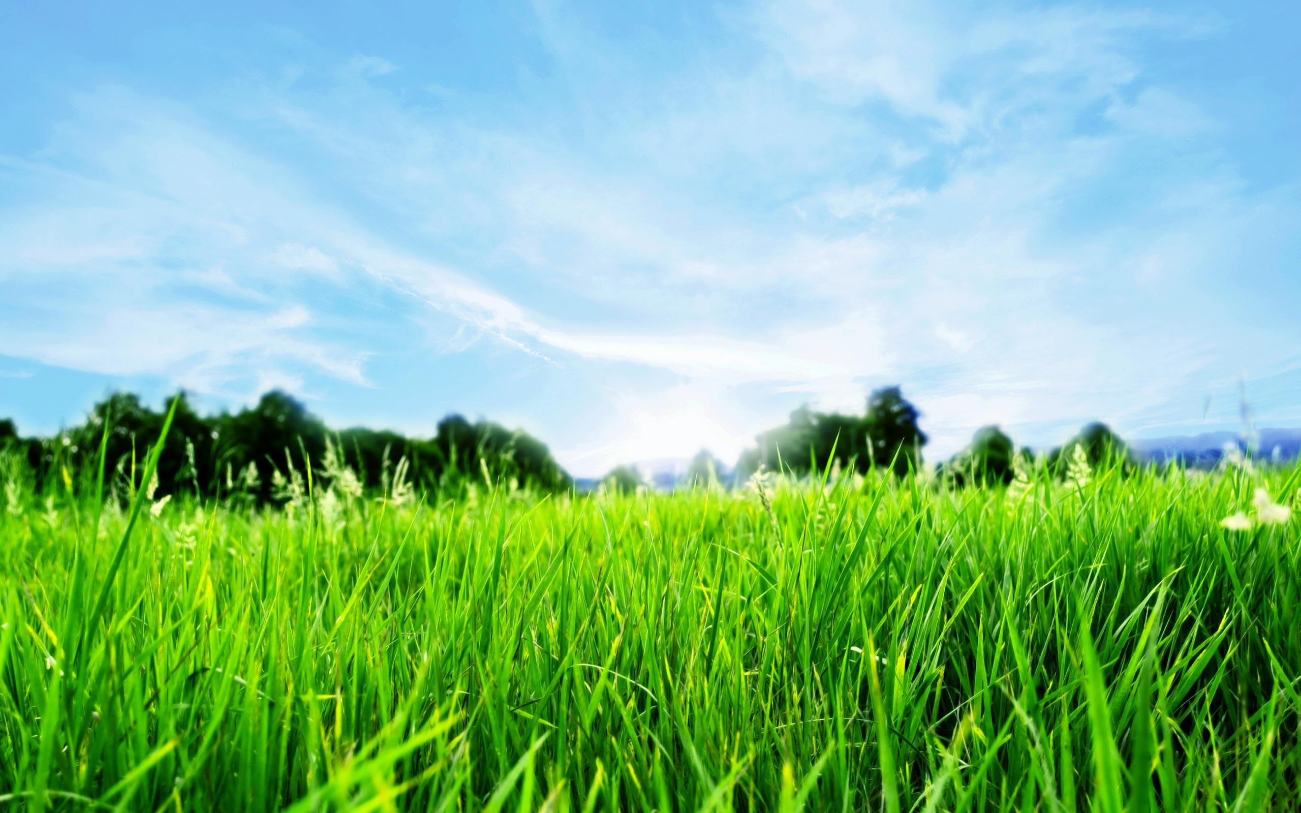 Bicentennial Park Blue Sky Green Grass